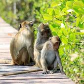 Monkey family in nature — Stockfoto