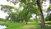 Peaceful park — Stock Photo