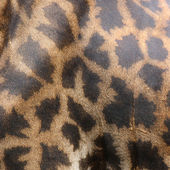 Zürafa cilt — Stok fotoğraf