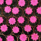 Cactus — Foto de Stock