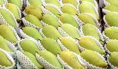 Mango — Foto de Stock
