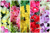Collection of colorful artificial flower — Zdjęcie stockowe