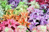 Konstgjord blomma — Stockfoto