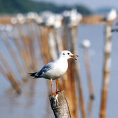Seagull sitting on a pole — 图库照片