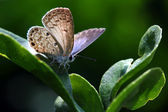 Beautiful butterfly — Stockfoto