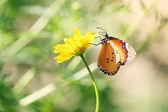 蝶 — ストック写真