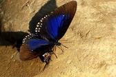 Kelebek ve arı — Stok fotoğraf