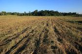 Dry grass field — Stock Photo