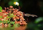 Butterfly on a flowe — Stock Photo