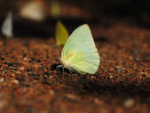 Butterfly on the ground — Foto de Stock