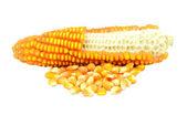 Maïs isolé sur fond blanc — Photo