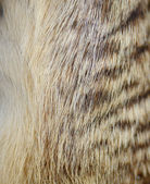 Genuine leather skin of Meerkat closeup side and breast profile — Stock Photo