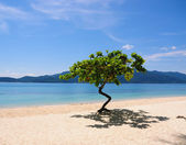 Trees on the beach in Thailand — Stock Photo