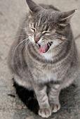 灰色の猫 — ストック写真