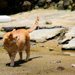 图库照片: Cat on wasted beach