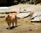 Cat on a wasted beach — 图库照片