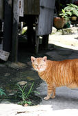Cat on a wasted town looking to you — ストック写真