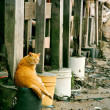 图库照片: Cat under basement of house in wasted bay