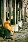 Cat under the basement of a house in a wasted bay — Stockfoto