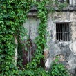 Stock Photo: Wall of old house with Green Rattan