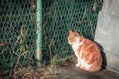 Kedi çit yanında, asya dinleniyor — Stok fotoğraf