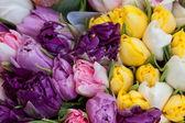 Bouquet of different varieties of tulips — Stock Photo