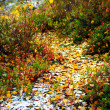 Autumn leaves in the snow — Stock Photo