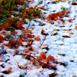 Leaves in the snow — Stock Photo #42349025