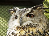 Owl's head — Stock Photo