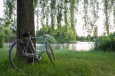 Bicycle under a tree in an italian garden — Стоковое фото