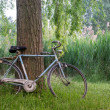 Bicycle under a tree in an italian garden — Stock Photo #47926019