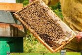 Bijen in de raten — Stockfoto