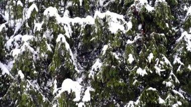 Queda de neve — Vídeo Stock