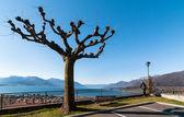 Vista do lago maggiore do veddo — Fotografia Stock