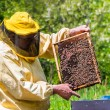 Beekeeper checking a beehive — Stock Photo #48568201