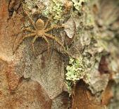 Mały pająk — Zdjęcie stockowe