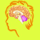 Insan beyninin — Stok fotoğraf