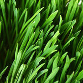 The green grass close up — Stock Photo