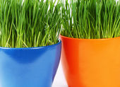 Green grass in pot a background — Stock Photo