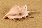 The sea shell in the sand — Stock Photo