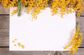 Yellow mimosa on wooden boards — Stockfoto