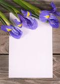Blue irises on wooden boards — Stock Photo