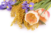 Spring flowers  isolated on white background — Stock Photo