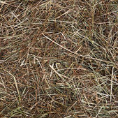 Dry hay as a  background — Stock Photo