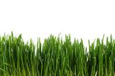 Grüne gras isoliert auf weißem hintergrund — Stockfoto
