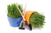 Green grass in pot isolated on white background — Stockfoto