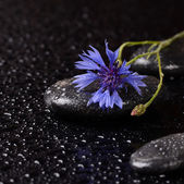 Stones for spa with water drops and cornflower — Stock Photo
