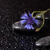 Pietre per spa con gocce d'acqua e fiordaliso — Foto Stock