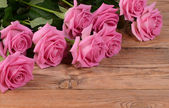 The pink beautiful rose a background — Stock Photo
