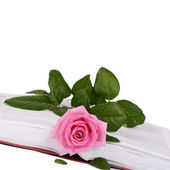 The rose on the book close-up — Stock Photo